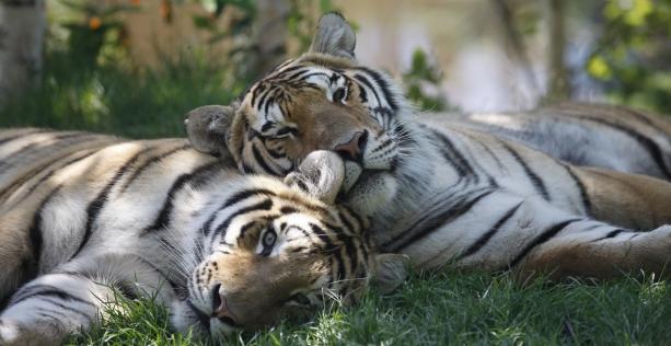 Forfait zoo